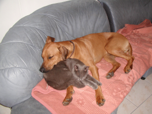 Baina und Vito